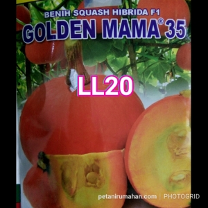 ll20 golden mama