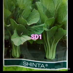 sd1 shinta