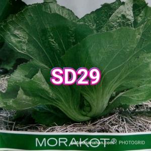 sd29 morakot