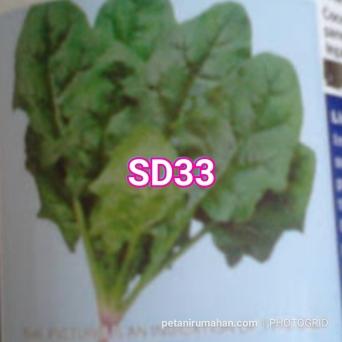 sd33 arlite