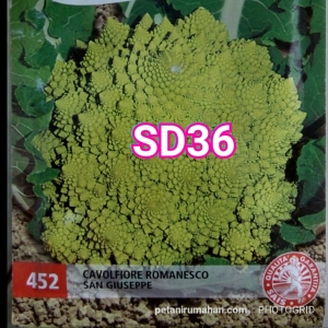 sd36 romanesco