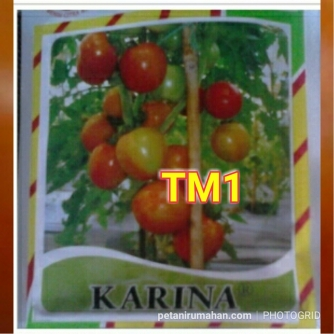 tm1 karina