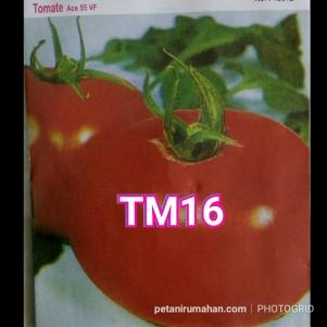 tm16 ace