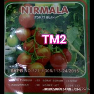 tm2 tomat buah