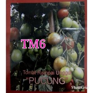 TM6 PUCHUNG