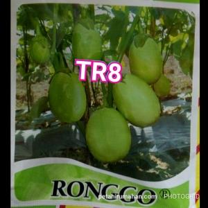tr8 ronggo