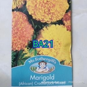 ba21 marigold african