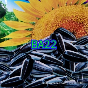 ba22 sunflower kuaci