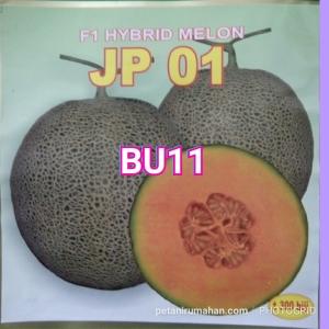 bu11 rock melon