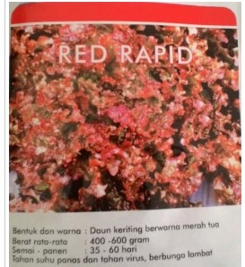 lt2 red rapid