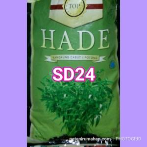 sd24 kangkung hade