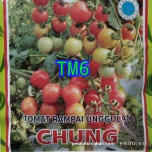 tm6 tomat rampai