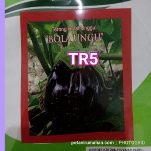 tr5 terong pondoh ungu