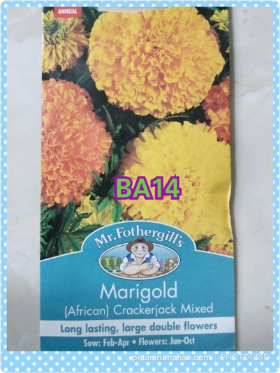 ba14 marigold (african)