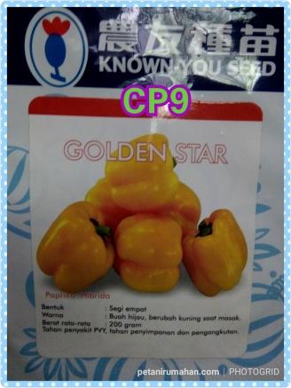 cp9 golden star