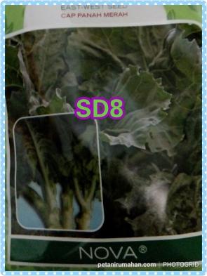 sd8 Nova