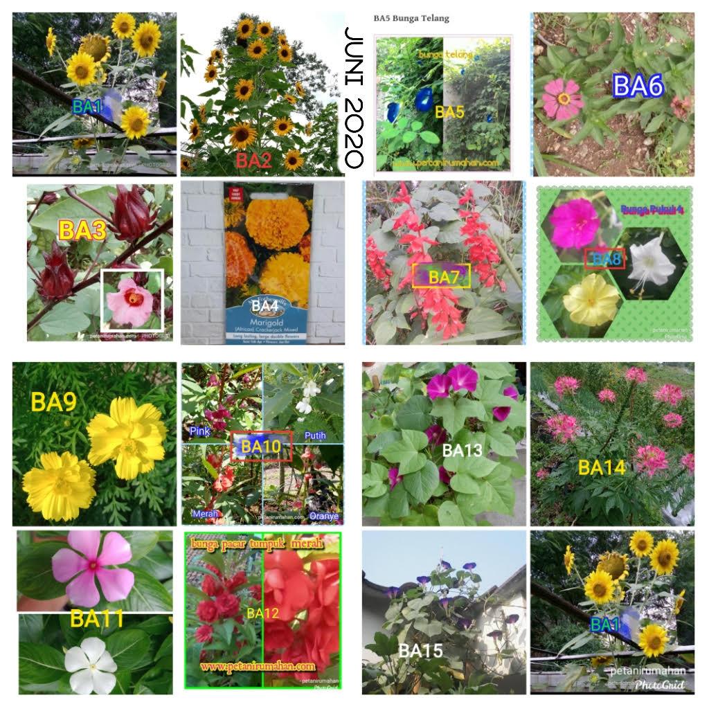 Gambar ini memiliki atribut alt kosong; nama filenya adalah bunga-juni.jpg
