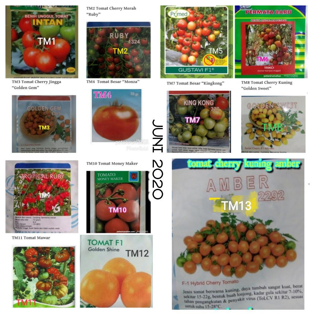 Gambar ini memiliki atribut alt kosong; nama filenya adalah tomat-juni.jpg
